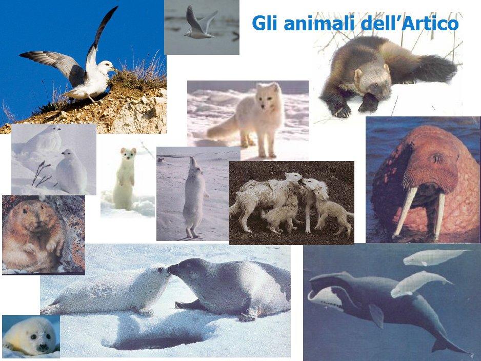 Anno polare internazionale scienza ambiente e popoli - Foto di animali dell oceano ...